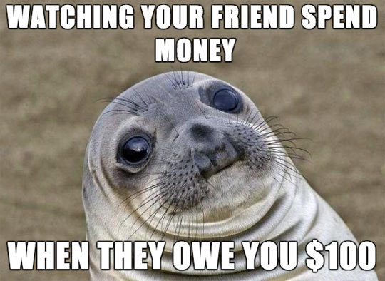 funny-picture-seal-mouth-face-money