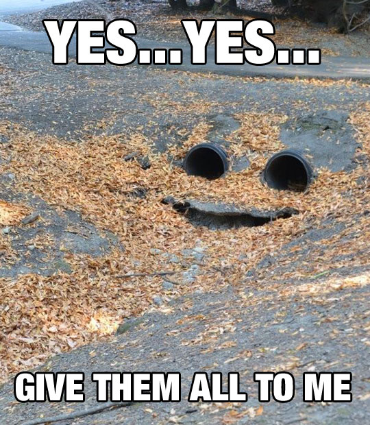 funny-picture-sewer-monster-leaves-eyes