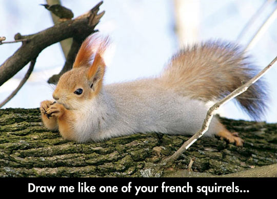 funny-picture-squirrel-lay-down-wood