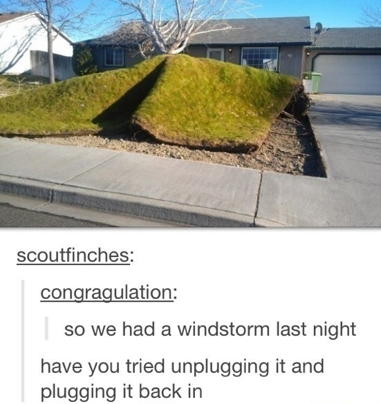 funny-picture-storm-grass