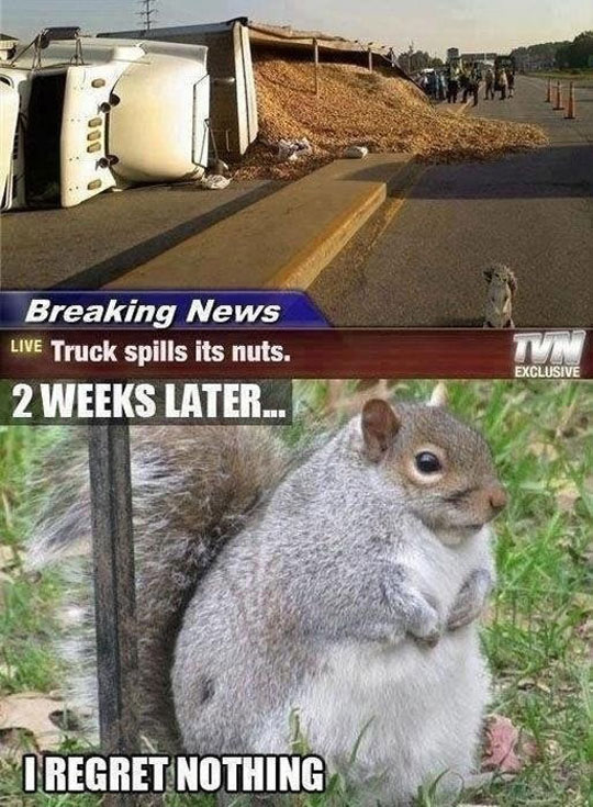 funny-picture-truck-accident-squirrel-fat
