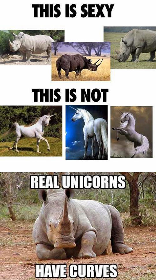 funny-picture-unicorn-curves-rhinoceros-real