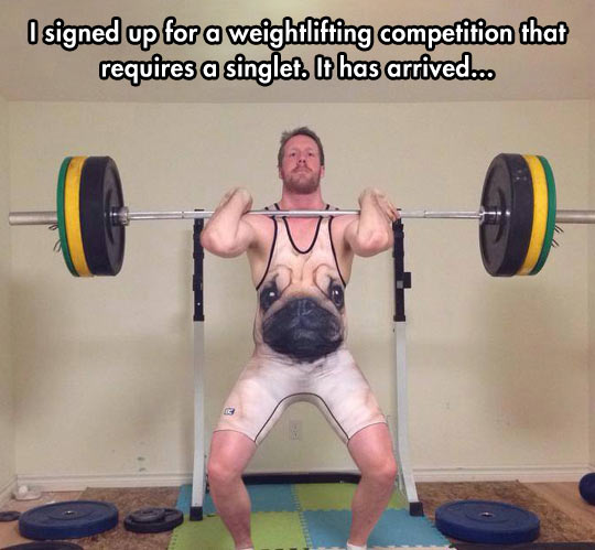 funny-picture-weightlifting-competition-singlet-pug