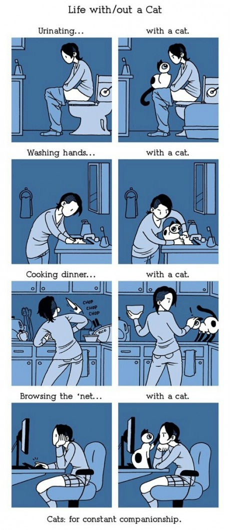 funny-picture-with-a-cat