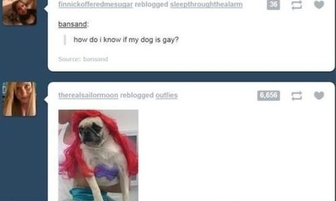funnypicture-dog-gay
