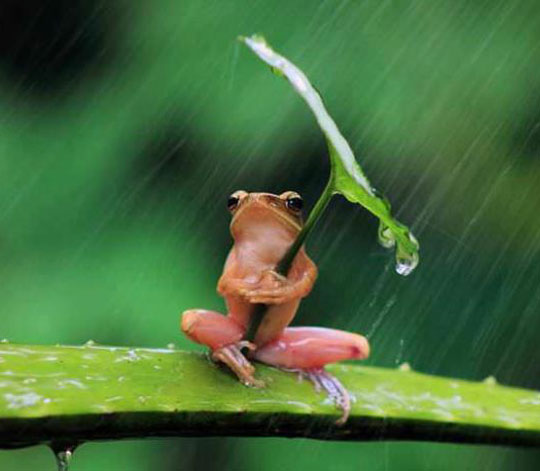 cute-picture-frog-leaf-umbrella-rain