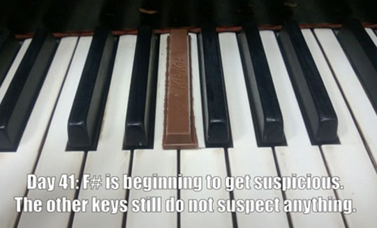 funny-picture-Kit-Kat-key-undercover-piano