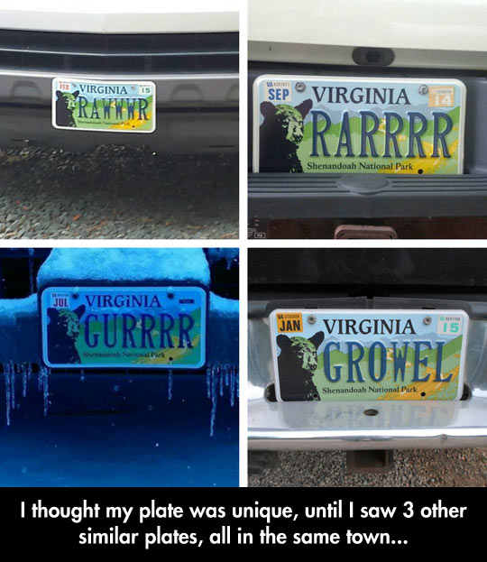 funny-picture-Virginia-bear-plate-license