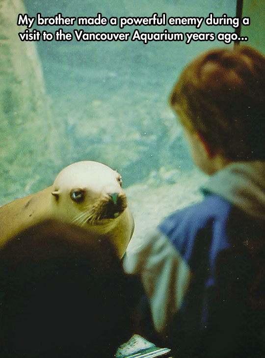 funny-picture-angry-seal-aquarium-enemy