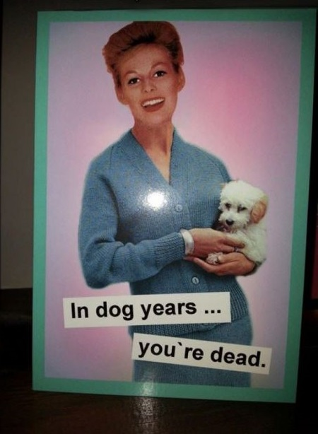 funny-picture-birthday-card-dog-years