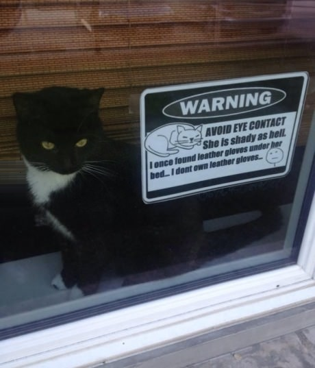 funny-picture-cat-sign-warning