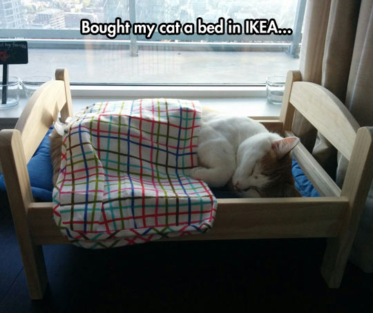 funny-picture-cat-sleeping-little-bed
