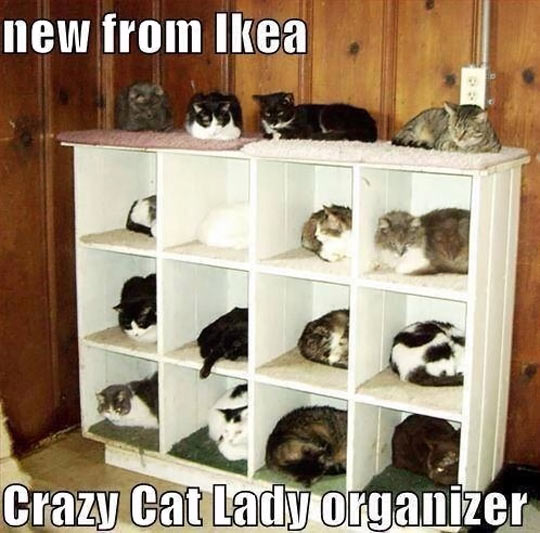 funny-picture-cats-IKEA-organizer-sleeping