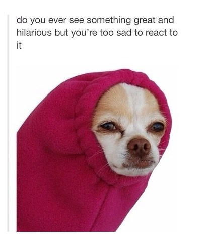 funny-picture-dog-hilarious-sad