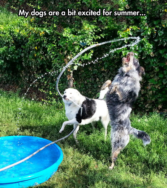 funny-picture-dog-hose-water-summer