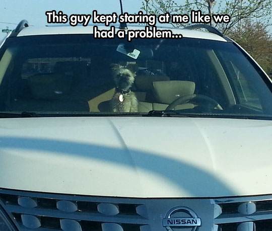 funny-picture-dog-inside-car-angry