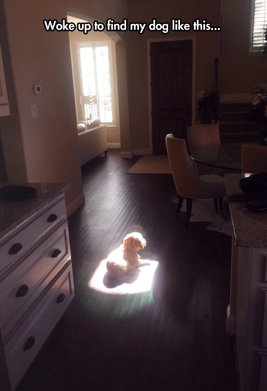 funny-picture-dog-kitchen-light-sun
