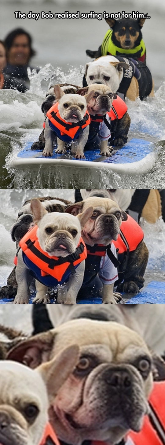 funny-picture-dogs-surfing-wave-bulldog