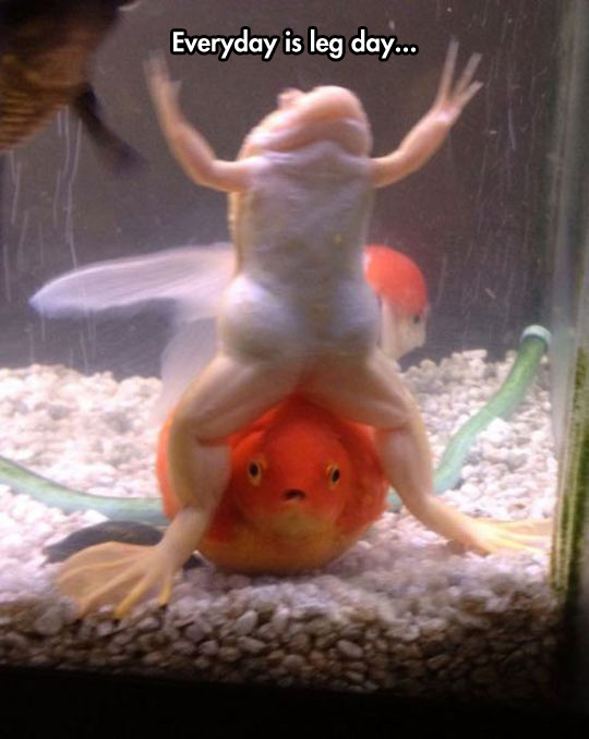 funny-picture-fish-frog-muscle-fish-tank