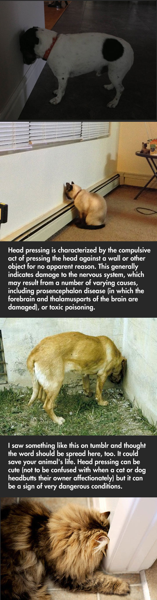 funny-picture-head-pressing-cat-dogs-issue