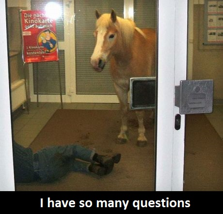 funny-picture-hors-questions