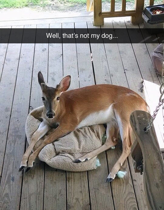 funny-picture-little-deer-house-appear-pillow