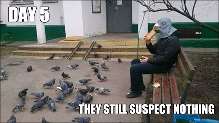 funny-picture-mask-pigeon
