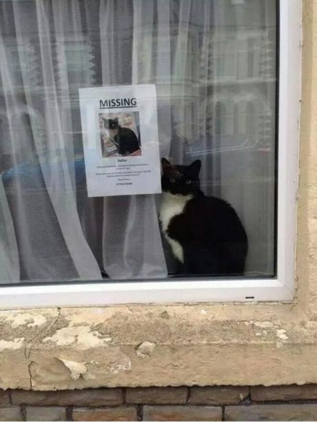 funny-picture-missing-cat