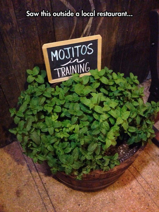 funny-picture-mojitos-training-local-restaurant