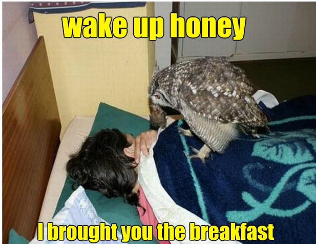 funny-picture-owl-breakfast