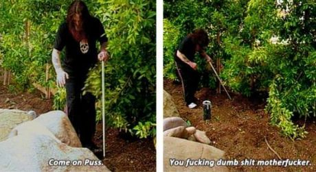 funny-picture-puss-ozzy