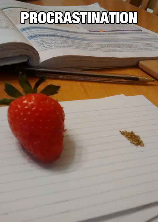funny-picture-strawberry-seeds-study-book