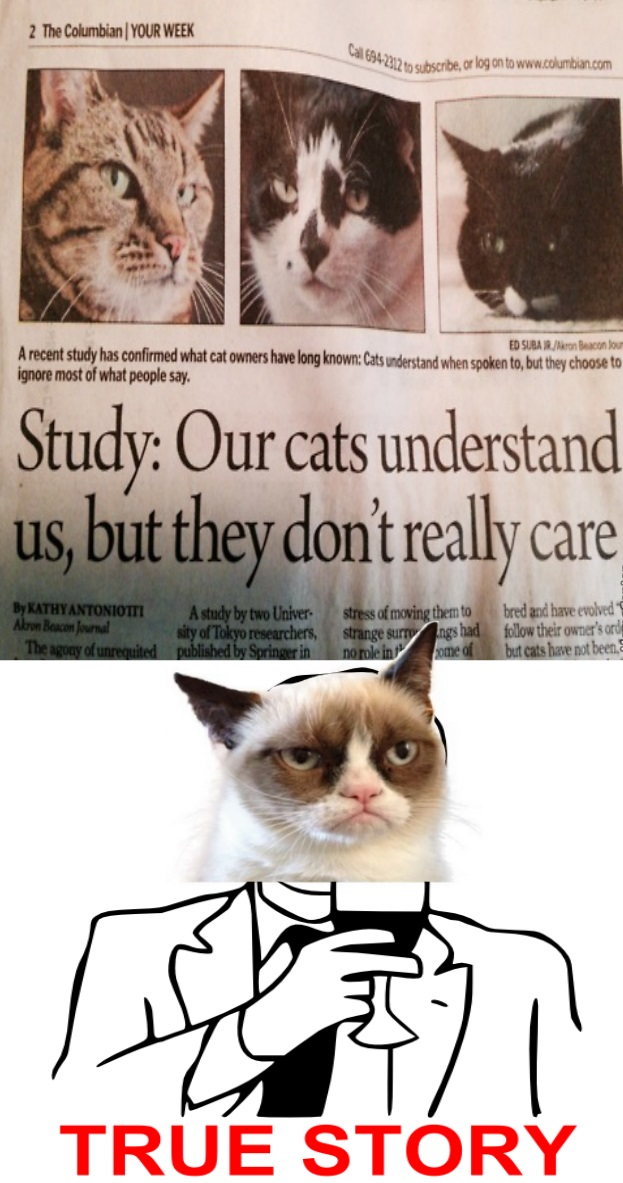 funny-picture-study-grumpy-cat