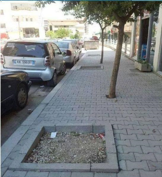 funny-picture-tree-sidewalk