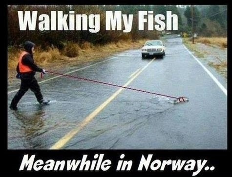 funny-picture-walking-fish