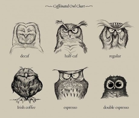 funny-coffee-owls-chart