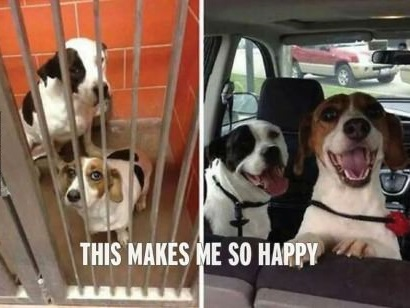 funny-dogs-happy-before-and-after