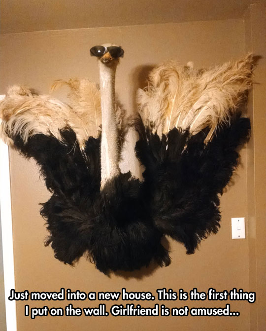 funny-ostrich-glasses-hanging-wall