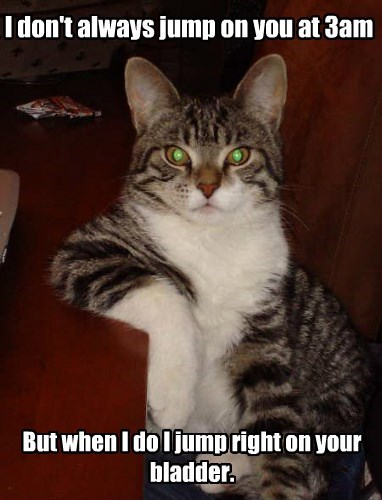 The Most Interesting Cat In World
