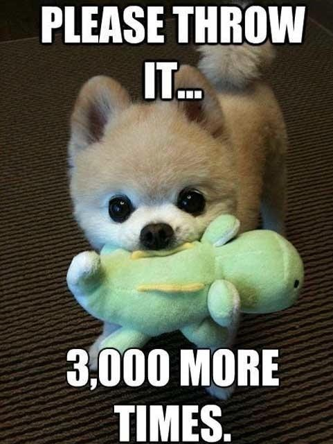funny-puppy-cute-toy