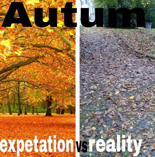Funny-Autumn-leaves-expectation-reality