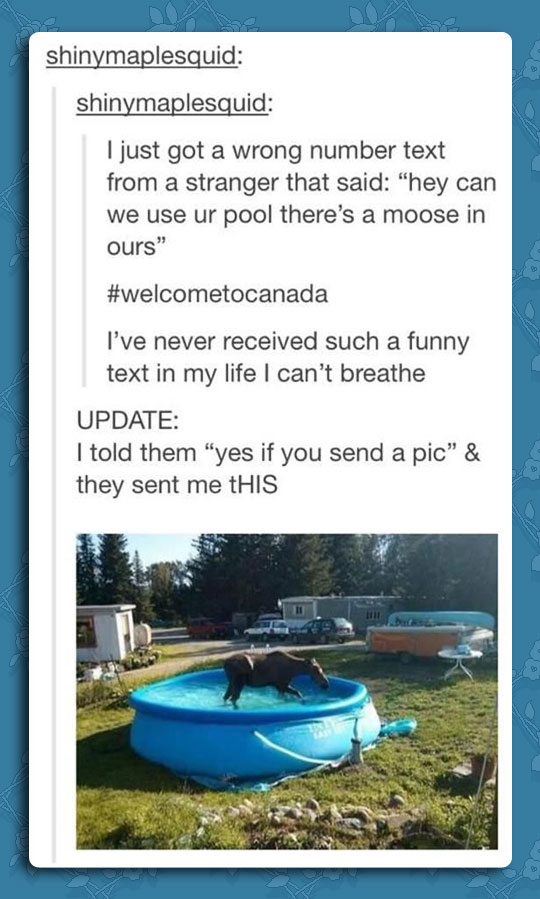 funny-Canada-pool-moose-weird