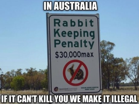 funny-rabbit-sign-australia