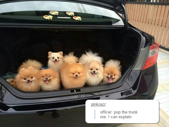 funny-car-trunk-full-dogs