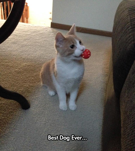 funny-cat-catch-ball-home