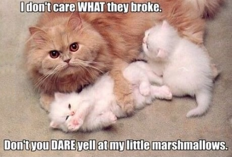 funny-cat-kittens-cute-marshmallows