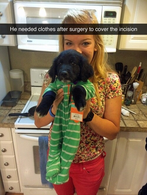 funny-clothes-dog-surgery-cute