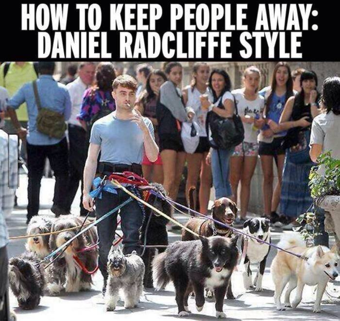 funny-daniel-radcliffe-dogs