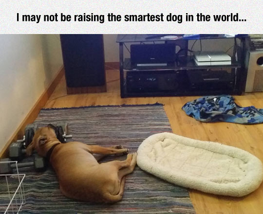 funny-dog-bed-weights-sleeping