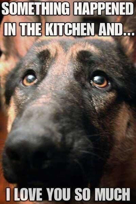 funny-dog-face-sadness-warning